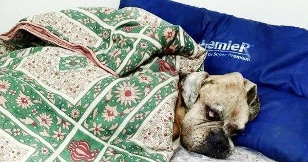 Cachorro não resiste de tristeza após morte do dono ...