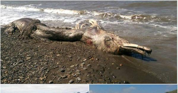 Golfinho mutante? Criatura bizarra encontrada na praia tem bico de ...