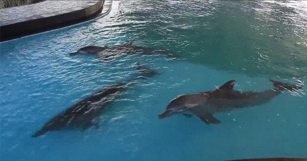 Surfista luta pela libertação de golfinhos confinados - Notícias - R7 ...