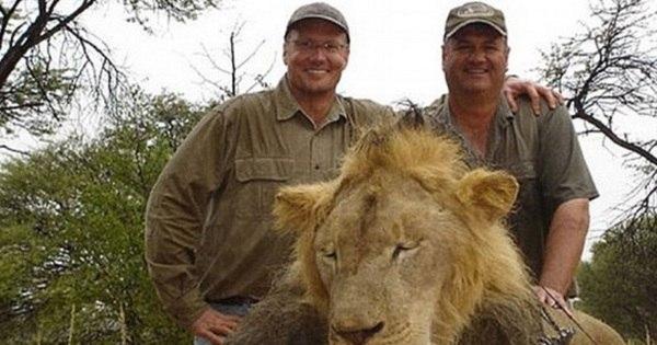 """""""Assassino e covarde"""": Americano decapita leão mais famoso da ..."""