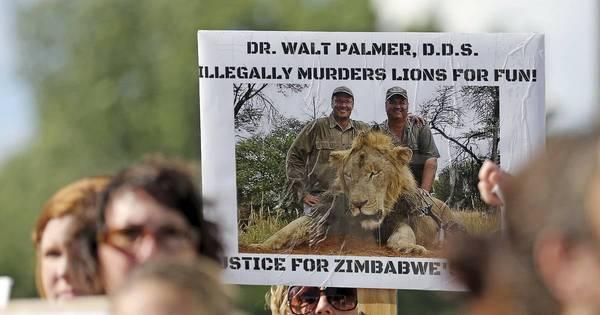 Dentista que matou leão Cecil não será incriminado - Notícias - R7 ...