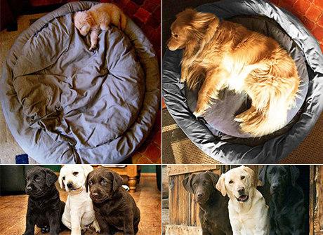Confira 22 das fotos mais fofas de pets antes e depois de crescerem