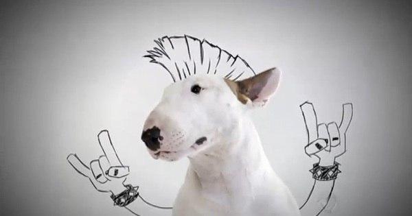 """Após ser """"fantasiado"""" pelo dono, cachorro vira celebridade na internet"""