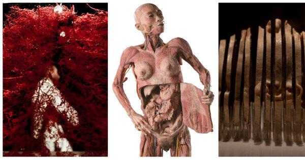 Imagens incríveis: exposição em Brasília mostra o corpo humano ...