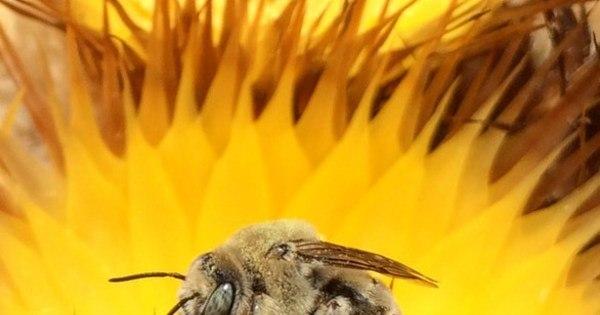 Soro da Unesp para picada de abelha será testado em humanos ...