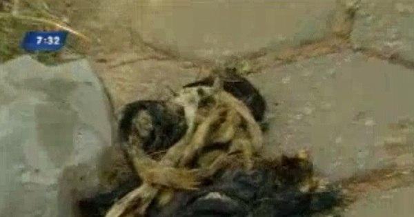 Delegado descarta venda de carne de gato em festa no sul de MG ...