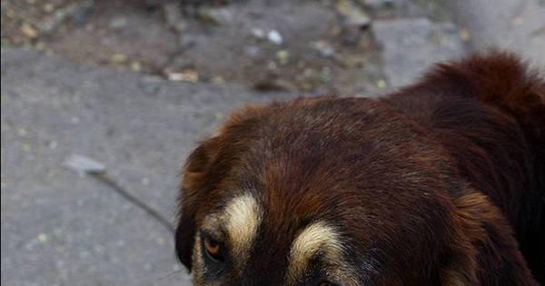 Cadela amamenta criança abandonada pela mãe, no Chile ...
