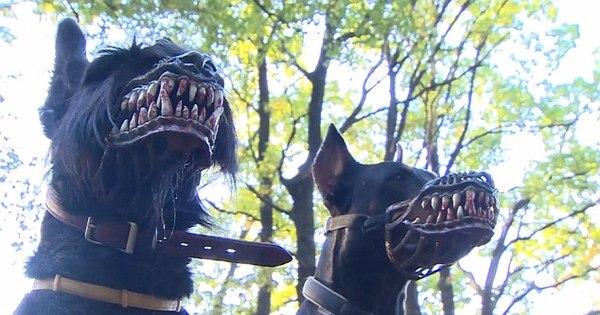 Assustador! Máscaras deixam cachorros com caras sinistras e ...
