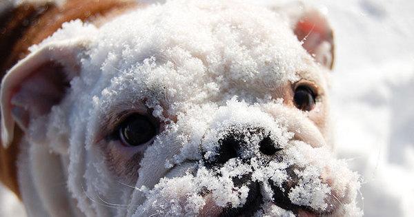 Animais brincando na neve vão derreter seu coração; espie! - Fotos ...