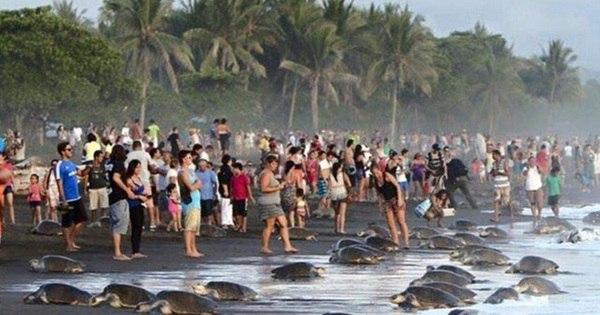 Turistas sem- noção ajudam a extinguir tartarugas-marinhas - Fotos ...