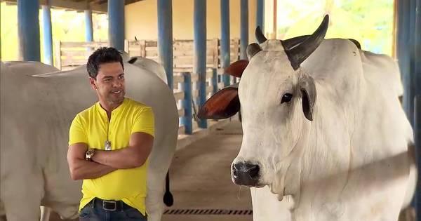 Domingo Espetacular mostra a milionária fazenda de Zezé di ...