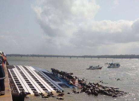 Barco com 5.000 bois naufraga e população tenta salvar animais
