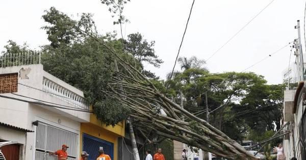 Após chuva, SP sofre com queda de árvores e falta de energia ...