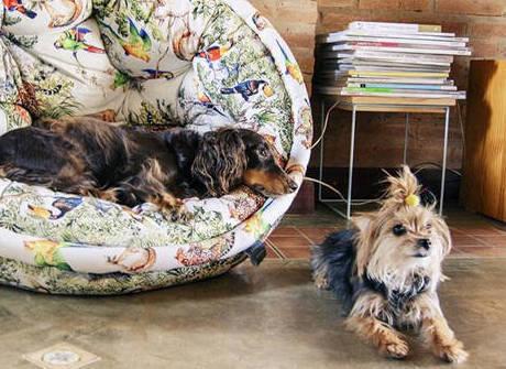 Veja 7 dicas para adaptar a casa para cachorros e gatos