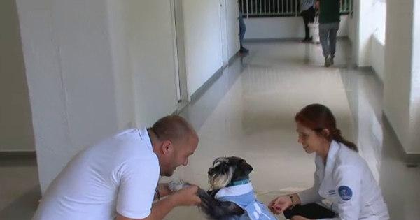 Cachorro vai a cemitério para consolar pessoas que perderam ...