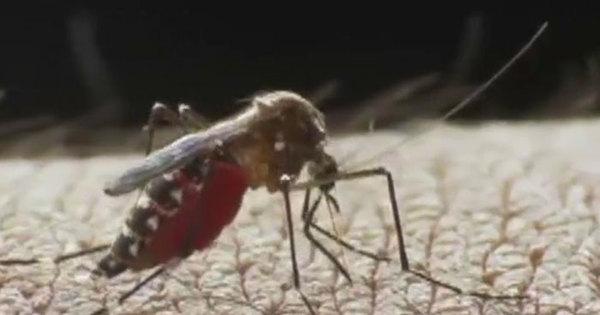 Primeiro caso de zika vírus no Entorno do DF é confirmado em grávida