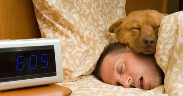 Dormir com animal de estimação melhora a qualidade do sono, diz ...