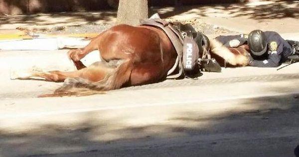Emocionante: homem deita na rua para acompanhar últimos ...