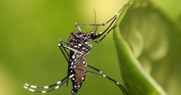 Epidemia de zika no Brasil causa apreensão nos EUA - Notícias ...