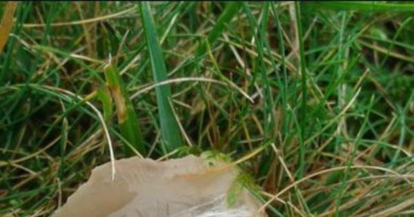 Mistério da natureza! Foto de 'ovo alien' de aparência assustadora ...
