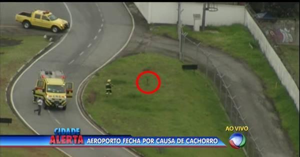 Congonhas: cachorro invade pista e fecha aeroporto - Notícias - R7 ...