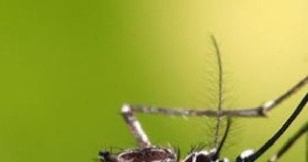 Casos de zika vírus foram detectados na Alemanha e na Grã-Bretanha