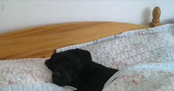 Dormir com animal de estimação ajuda a melhorar o sono do dono ...