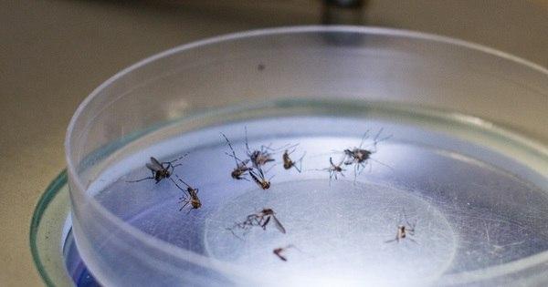 Zika vírus é encontrado com potencial de infecção em urina e saliva ...