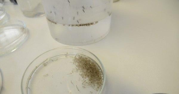 Transmissão sexual de zika vírus é confirmada em Dallas, Estados ...