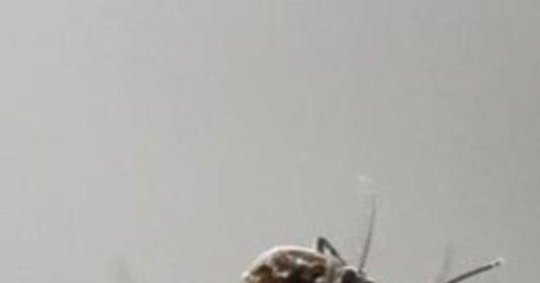 Itália registra 5º caso de zika - Notícias - R7 Saúde