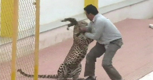 Leopardo invade escola e fere seis pessoas na Índia - Notícias - R7 ...