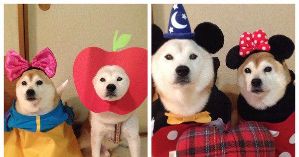 Peter Pan, Branca de Neve e mais: cachorros fazem cosplay de ...