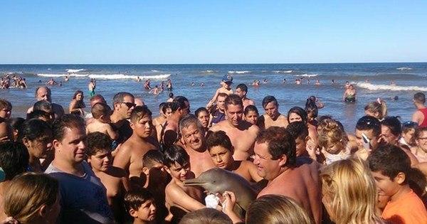 Após polêmica com morte de golfinho, turistas dizem que filhote já ...