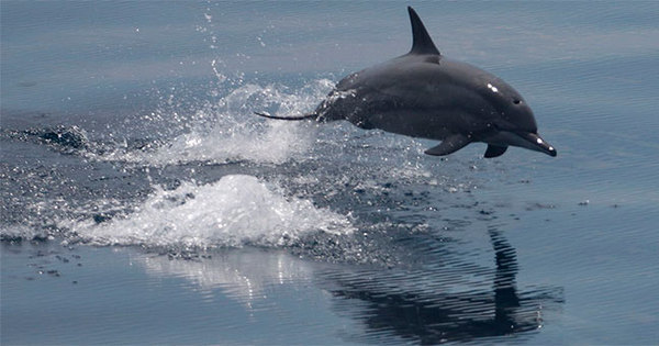 Isso é sério? Turistas que mataram golfinho têm seus RGs cassados ...