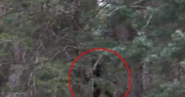 Bizarro! Pé Grande dá as caras em imagens feitas no meio do mato ...