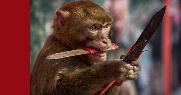 Isso é sério? Comando Vermelho usa macacos para assaltar ...