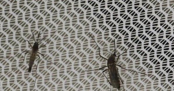 Zika e microcefalia vão crescer no Sudeste, alerta Ministério da Saúde