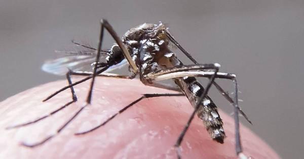 Comitê minimiza risco de transmissão de zika nas Olimpíadas ...