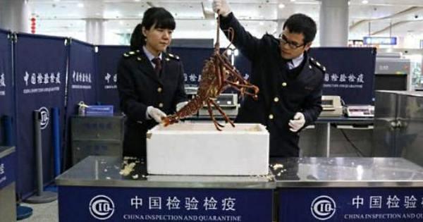 Turista é detido com lagosta viva em mala - Entretenimento - R7 ...