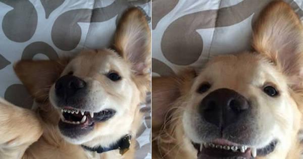 Sorriso metálico: cachorro faz sucesso nas redes sociais por usar ...