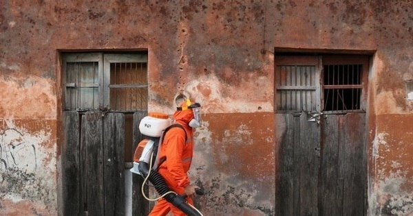 Enfraquecimento de medidas contra Aedes permitiu reintrodução do ...