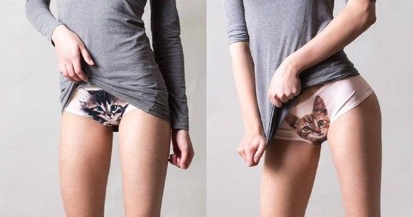Calcinha com estampa de gato é a nova tendência fashion das lojas ...