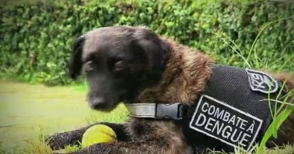 Domingo Espetacular desta semana mostra cão vira-lata que fareja ...