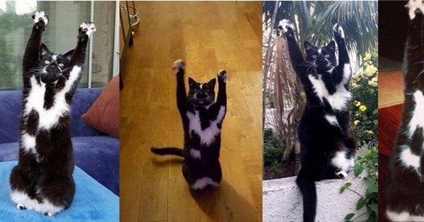 Isso é sério? Gato adotado levanta patinhas e se rende quando ...