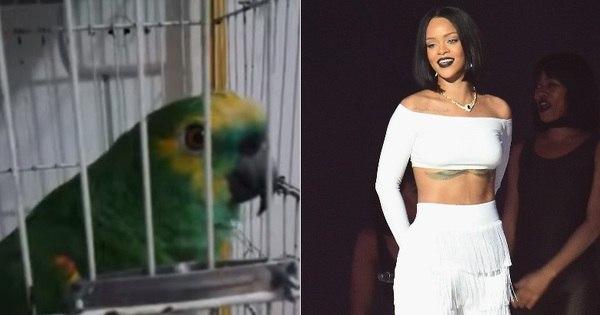 Papagaio sabe cantar músicas da Rihanna e vira febre na internet ...