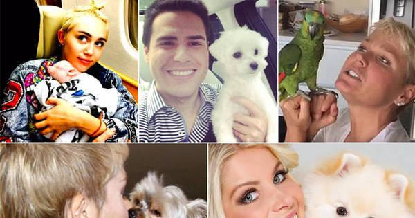 Fofuras: conheça os pets dos famosos que fazem tanto sucesso ...