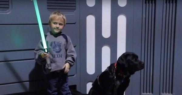 Amizade verdadeira! Labrador salva a vida de garotinho com ...