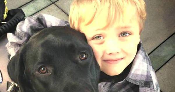 Cão herói salva a vida de criança enquanto família dormia - Fotos ...