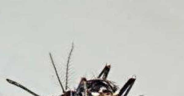 Exemplo no combate ao Aedes, cidade do Paraná volta a ter ...