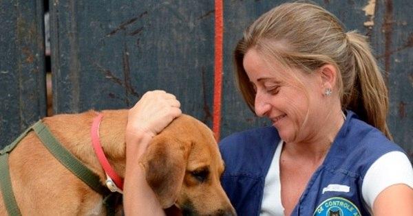 Feira promove adoção de animais sobreviventes da tragédia de ...
